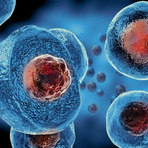 Βλαστοκύτταρα